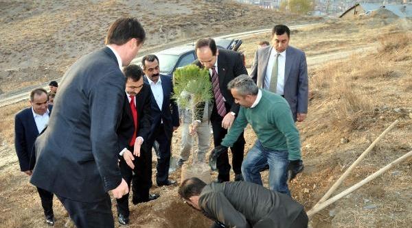 Hakkari Üniversitesi Kampüsüne 4 Bin Çam Fidani Dikildi