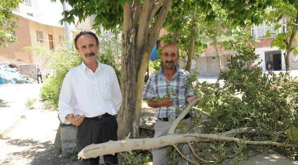 Hakkari'de Habersiz Ağaç Kesimi Vatandaşı Kızdırdı