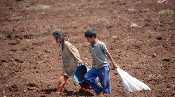 Hasat Artığı Patates Yoksulun Gıdası Oldu