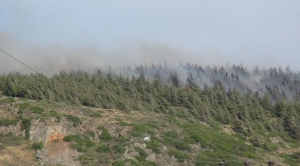 Hatay'da 4 Hektarlık Kızılçam Ormanı Yandı
