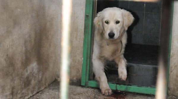 Haytap Başkanı Çitirik: Ölüm Kampına Hayvanları Vermeyeceğiz