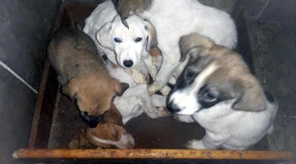 Hayvan Barinağinda 3 Köpek Soğuktan Donarak Telef Oldu