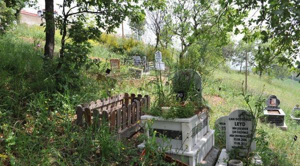 Hayvan Mezarlığı Yoğun Talep Görünce Kapasitesi 2 Katına Çikartildi