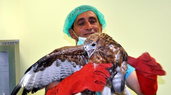 Hayvanat Bahçesi Kliniğinde Sokak Ve Yaban Hayvanlarına Tedavi