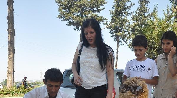 Hayvansever Öğretmen, Komşusunun Vurduğu Sokak Köpeği İçin Seferber Oldu