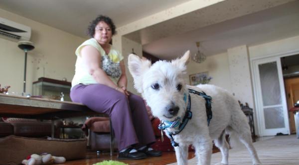 Hayvanseverden Epilepsi İlaci Yakınması