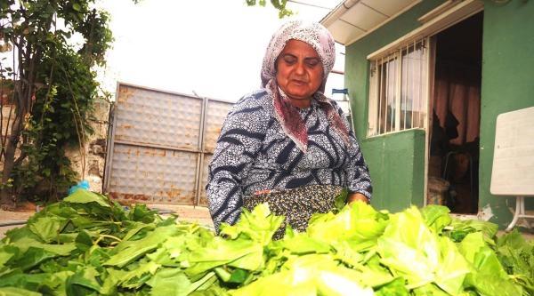 İlaç Kalıntısı Asma Yaprağı İhracatini Vurdu