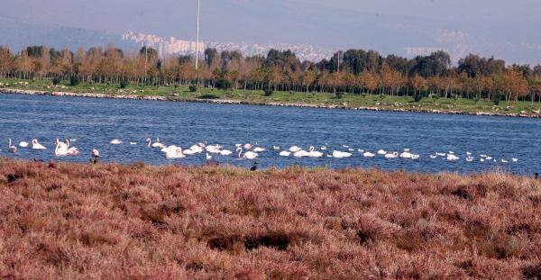 Inciralti Izmir'In Ikinci Kuş Cenneti Oldu