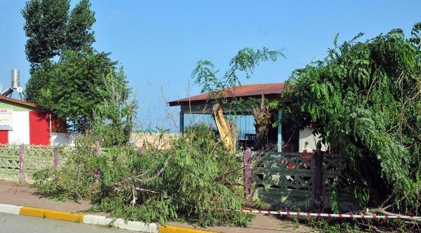 İnebolu'da Fırtına Ağaçları Devirdi
