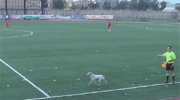 İnegöl'de Futbol Maçına 'köpek' Arası