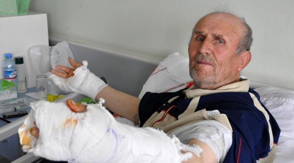 İpini Koparan Köpek Yaşlı Adamı Yaraladı