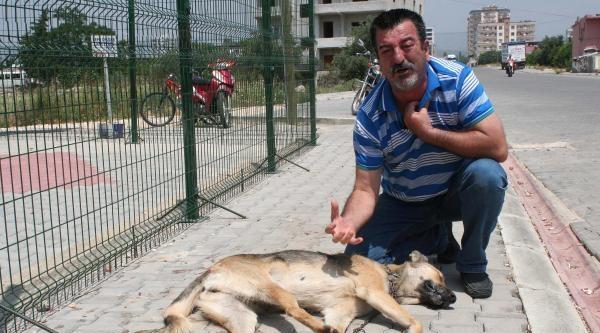 İşkence İle Öldürülen Köpeğe Ağladı