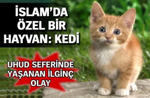 İslamda kedinin önemi