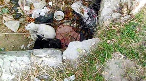 Isparta'da Köpek Vahşetine Suç Duyurusu