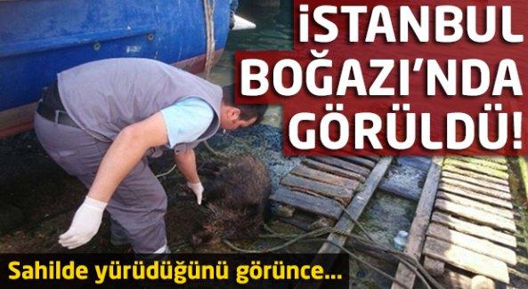 İstanbul Boğazı'nda Görüldü!