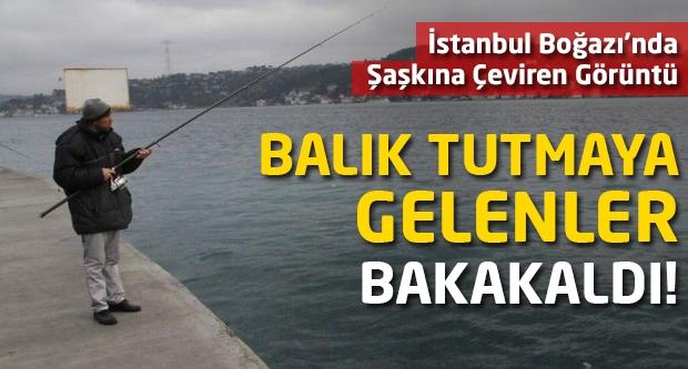 İstanbul Boğazı'nda Şaşkına Çeviren Görüntü...