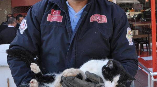 Itfaiyeden Kedi Kurtarma Operasyonu