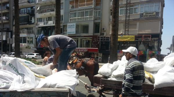 İzmir'de Hayvanseverlerin İsyani Atı Yükten Kurtardı
