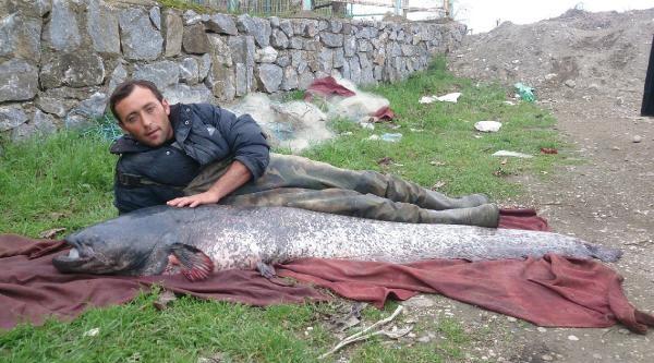 İznik Gölü'nde 87 Kiloluk Yayın Balığı Yakalandı