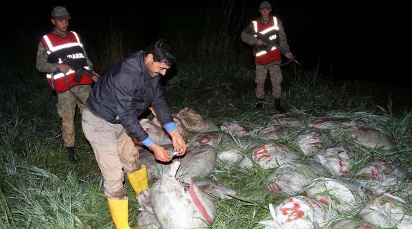 Jandarmadan Kaçak Balık Avcılarına Operasyon