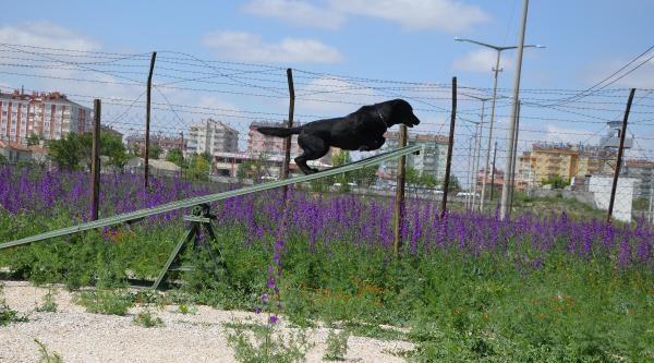 Jandarmanın Eğitimli Köpeklerinden Çocuklara Gösteri