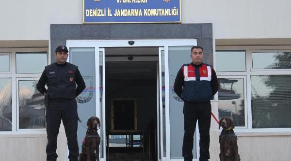 Jandarmanin Gözbebeği Özel Eğitimli Köpekler 'vaşak' Ile 'ahir'