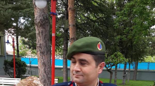 Jandarmanın Yaralı Bulduğu Kızıl Şahin Tedavi Ettirildi