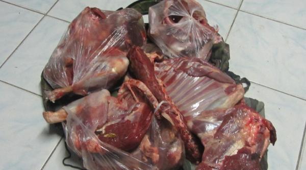 Kaçak Yaban Keçisi Avina 26 Bin Lira Ceza