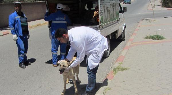 Kahramanmaraş'ta Sokak Köpeklerinin Bakım Ve Tedavisi Yapıldı