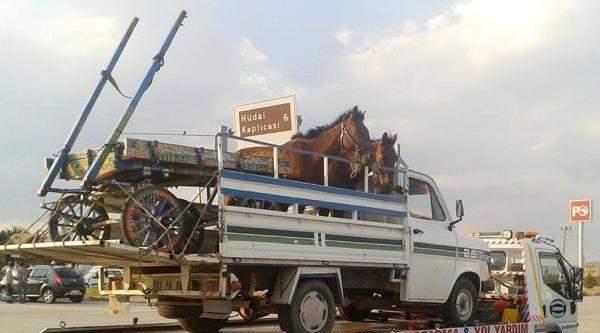 Kamyonet Kaza Yaptı, Kasasındaki Atlarla Çekiciye Yüklendi