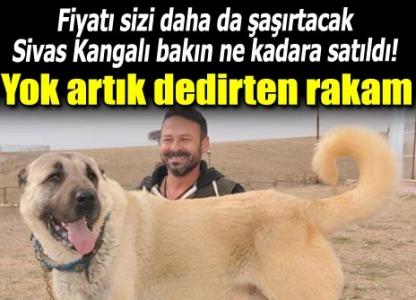 Kangal köpeğine rekor ücret!