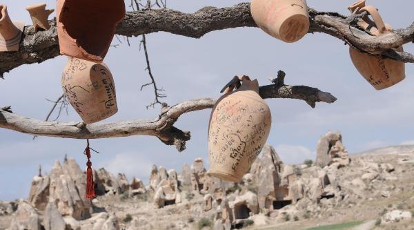 Kapadokya'da Çanak Ağaç
