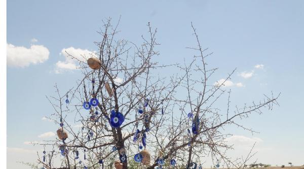 Kapadokya'nın Zirvesi Uçhisar'da Nazar Ağaçları