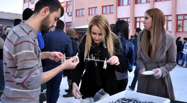 Kar Üzerinde Hamsi Festivali