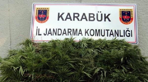 Karabük'te Kenevir Operasyonu