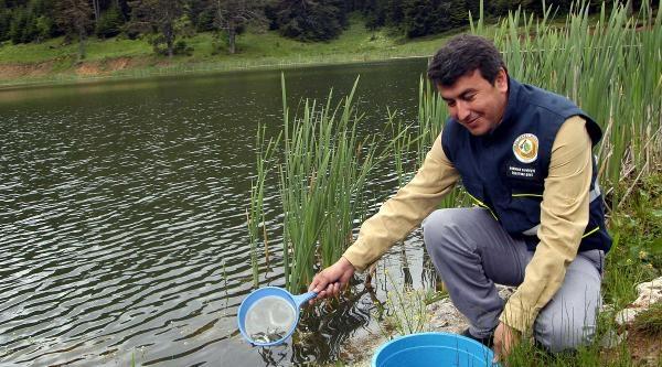 Karabük'te Yangın Göletine 20 Bin Balık Bırakıldı