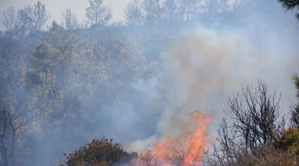 Karaburun Ve Urla'da Orman Yangını  - Fotoğraflar