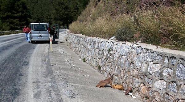 Karakulak, Avını Yerken Görüntülendi