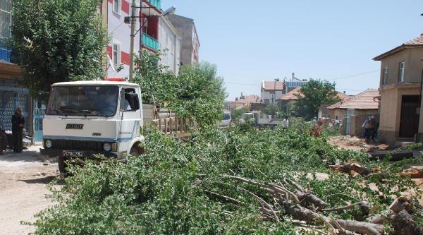 Karaman'da Belediyenin Yol Genişletme Çalişmasi Sırasında Ağaçları Kesmesi Tepkiye Neden Oldu