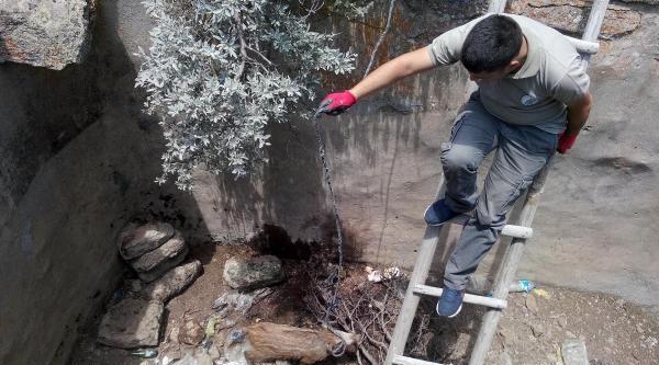 Karaman'da Yavru Domuzu Kurtarma Operasyonu