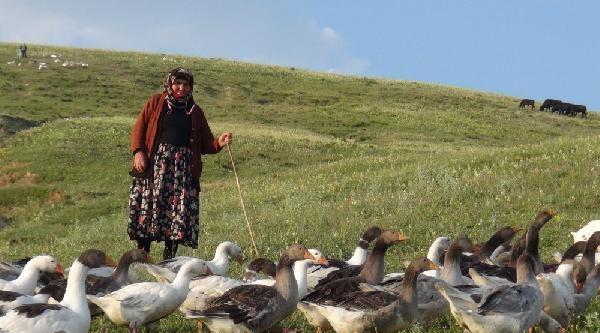 Kars'ta Yetiştirilen Kazlar İstanbul'da Satılıyor
