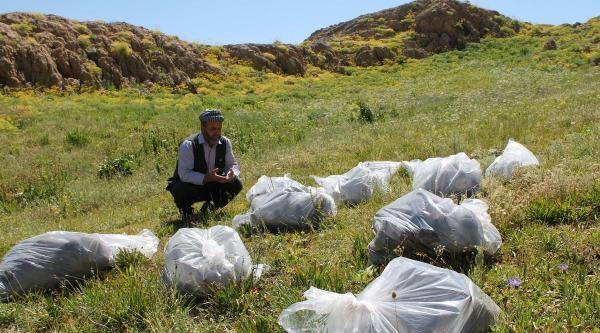 Kato Dağı'nda 12 Pkk'lının Gömüldüğü Toplu Mezar