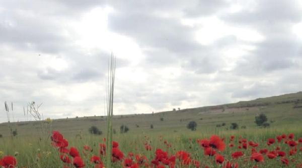 Kayseri'de Dağlar Çiçeklendi