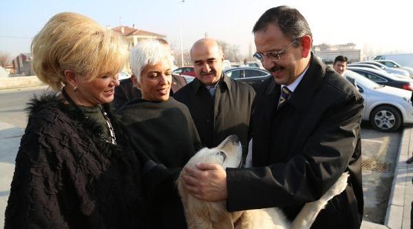 Kayseri'De Hayvanlari Koruma Derneği Kuruldu