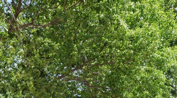 Kayseri'de Saatteki Hızı 85 Kilometre Olan Fırtına Ağaçları Kökünden Söktü