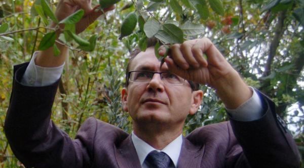 Kazdağlari'Na Tropikal Meyve Bahçesi