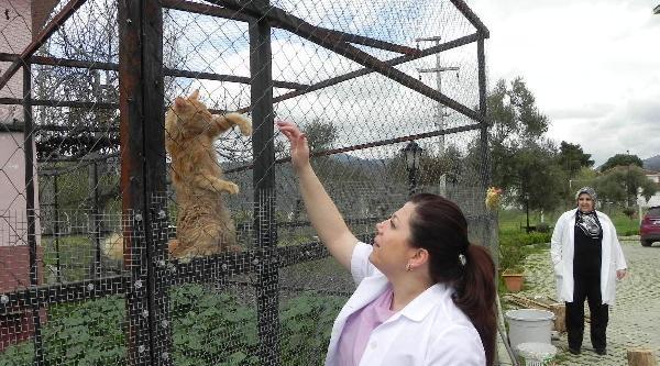 Kedi 'fıstık'ın Çabasi