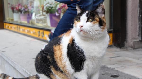 Kedinin Pasajdan Atılmaması İçin İmza Topladılar