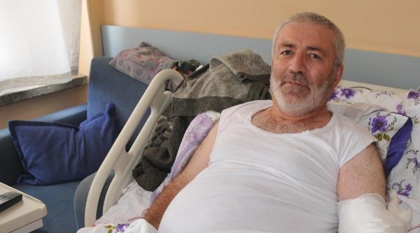 Kestiği İnekten Şarbon Hastalığına Yakalandı