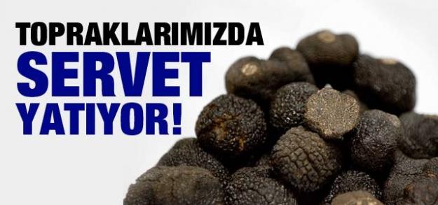 Kilosu 2 bin euro! Avrupa'da zenginler, Türkiye'de domuzlar yiyor!